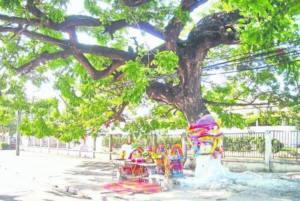 """在泰国合艾有棵神树"""",这棵百年""""女神树""""绿意盎然,最叫人称奇是祂常常出字让善信中奖,搞到黑市地下厂也怕怕。"""