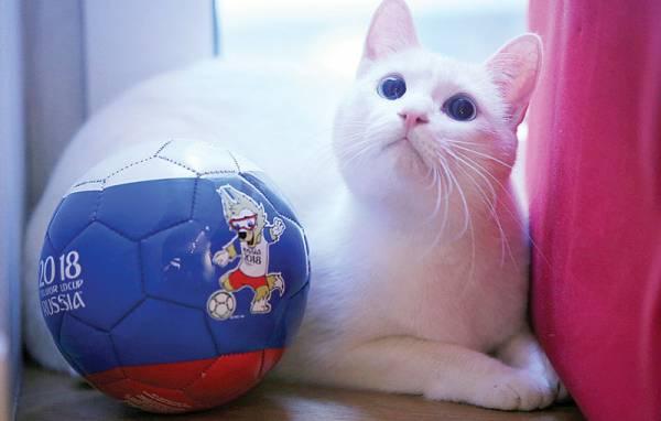 阿喀琉斯成为俄罗斯世界杯的官方预言家。
