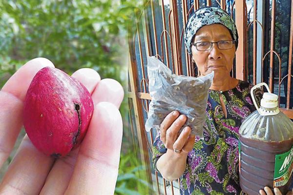 80岁nenek吃过皇冠果,也如年轻人般精力十足,病痛离身!