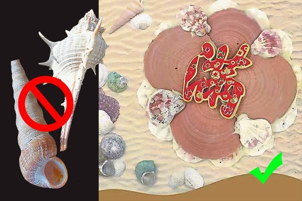 许师父表示,刺螺和锥螺摆在家不但会招惹小人,更会聚阴,而扇贝类的贝壳则是聚财、守财的象征。