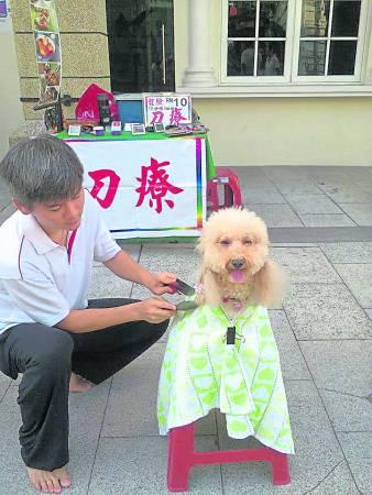 王承信说,刀疗不仅能调节免疫系统,也能起到安抚宠物情绪的作用。