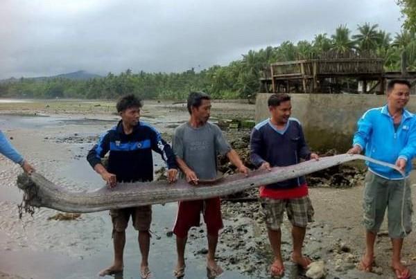 居民围观罕见的皇带鱼,它生活在深海水域,会因地震而受惊游至浅水避难,所以预示了会有大地震发生。