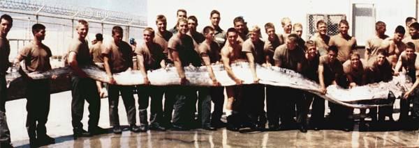1996年在美国加州捕获的皇带鱼,身长7米。