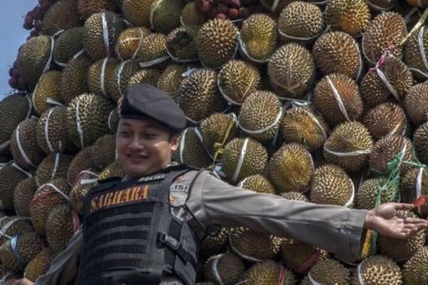 去年的沃诺沙兰榴梿节,出动警察守在榴梿塔前,以防民众失序乱抢。