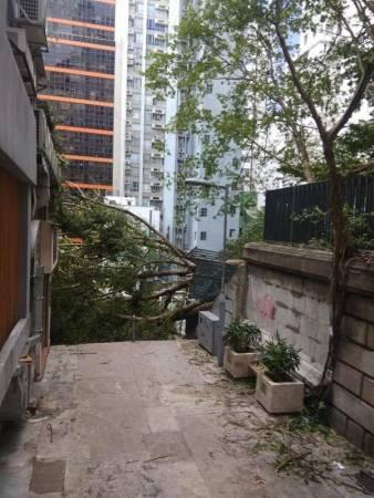 如今,楼梯旁好几棵拥有50年历史的大榕樹已倒塌。相关单位也已把这条街封锁。