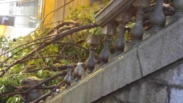 如今,石阶旁的树已被吹倒,砸向了石阶上导致石阶扶手被砸碎。