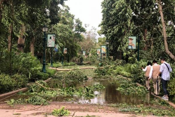 到处都是积水和倒塌的树木啊!