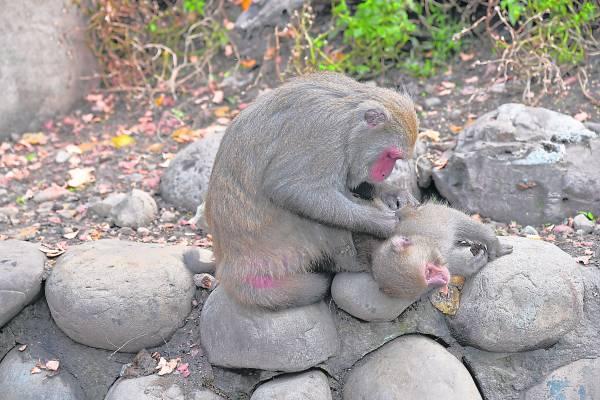 """即使猴王平常多威风凛凛,但面对""""情""""字,亦会显示出柔情的一面。"""