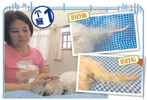Ta Lin第一次接受的宠物个案,是替朋友的狗狗做EO。当时的她,内心十分紧张,反而是狗狗劝她冷静。