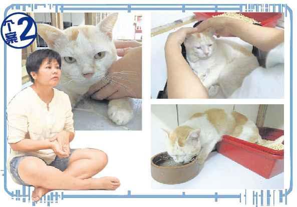 Andy是一只被医生判了死刑的猫,原本已无法行动及自理排便,但经过Ta Lin的治疗,它竟然可以重新站起来,还有能力走到猫砂盆大小便,甚至恢复吃固体食物的能力。同时,也是Andy教会Ta Lin尊重生命。
