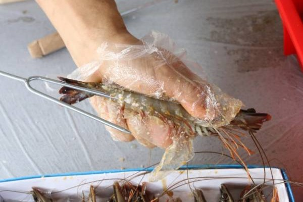 插虾时,头要向上,在虾脚位置直插至虾头方向。