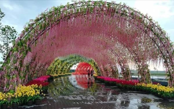 槟城的四季花海隧道也毫不逊色哦!