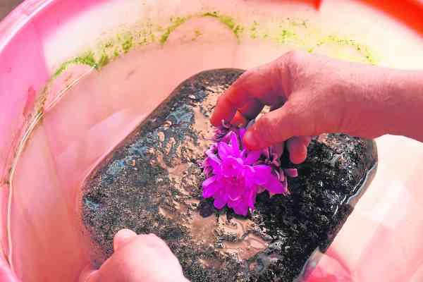 出真字前,需用花水先「沐浴」,才能从湿水的石头表面上看见真字。