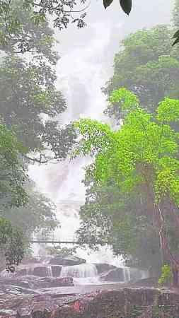 谭师父点出,瀑布山溪的水清亮,是一条水龙,若有衰气的人来浸了龙水,就会好运连连。