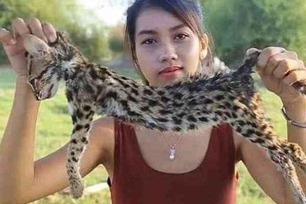 安林图在视频里展示她所捕获的渔猫,她过后说不知道这是濒危动物。