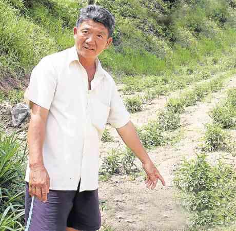 刘氏在住家附近的空地,种植了大约7千棵的忧遁草,他很乐意送给有需要的人。