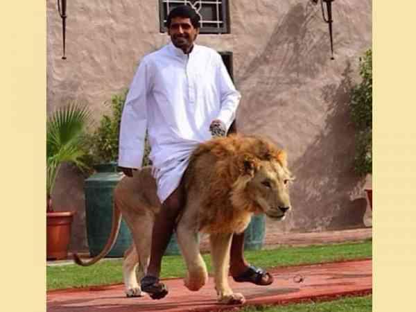 别人骑马,我骑狮子!
