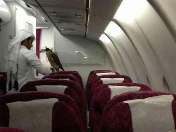 杜拜人养的宠物不是老鹰、就是猎豹... ...乖哦!