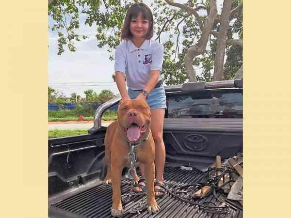 女友Amy Gan受刘文宏影响,深深爱上了比特犬。