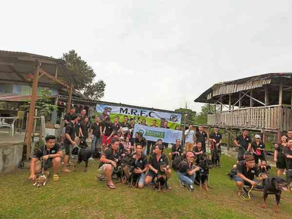 罗威纳犬俱乐部MRFC去年尾举办的原住民度假村之旅,成功吸引45位人和30余只罗威纳犬参加,场面十分壮观。