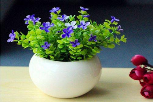 假植物不仅会漏财,还很容易造成感情上的问题。