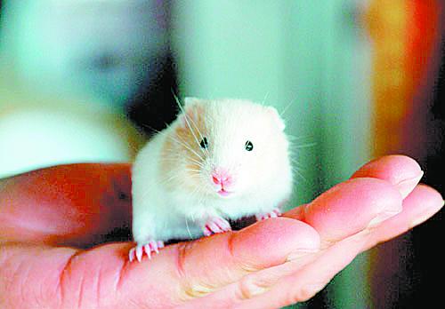 陈师父也劝今年最好不要养宠物鼠,会带来烂桃花和争吵。