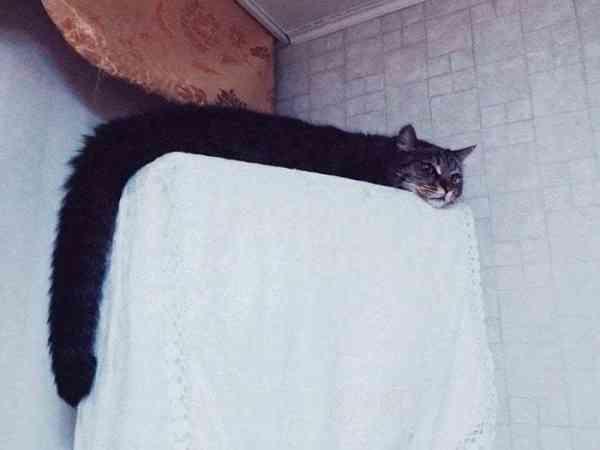 我说猫咪是 L 型的,给不给过?
