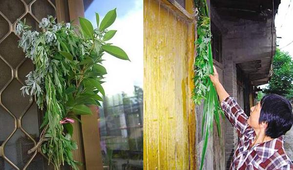 人们会在家门口挂几株艾草,由于艾草特殊的香味,用它来驱病、防蚊、辟邪。
