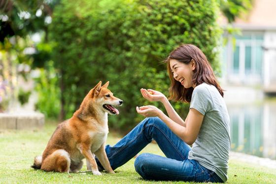 训练狗狗懂规矩是一个漫长的过程,主人要慢慢的引导自己的狗狗去懂规矩。