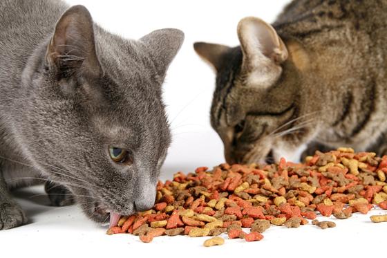 进食太快,也容易令猫咪肠胃不适,出现呕吐情况。