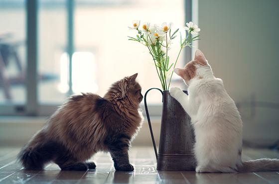 家中的盆栽,也是令猫咪中毒的主因。