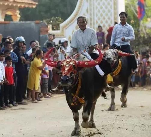 """骑着水牛参加""""亡人节""""的水牛赛。"""