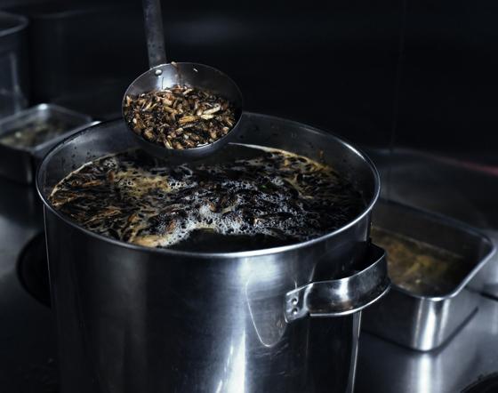 拉面的汤头也是用蟋蟀熬煮而成。