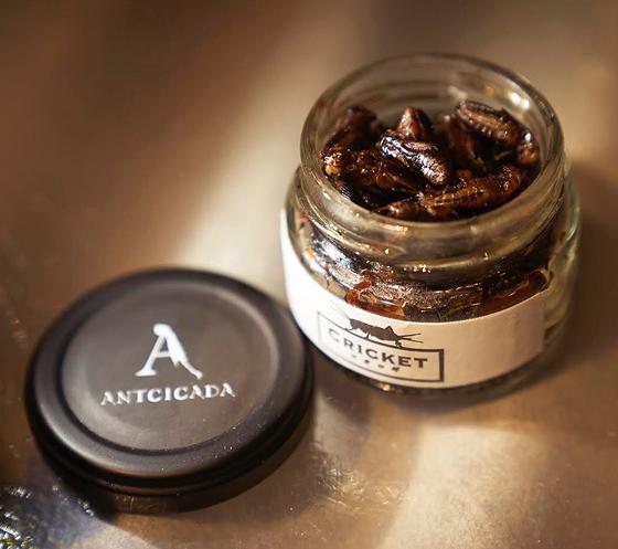 "ANTICADA 推出的罐装""腌制蟋蟀""。"