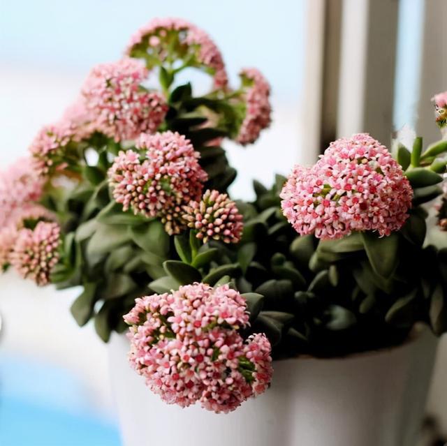 若放在室内就要向着有阳光的地方,这样能促进神童开花。
