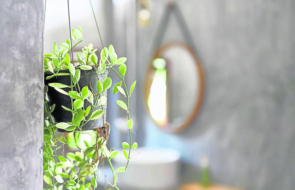 在厕所放一盆绿植物,能减少污浊的不利气场之余,还能提升运势。