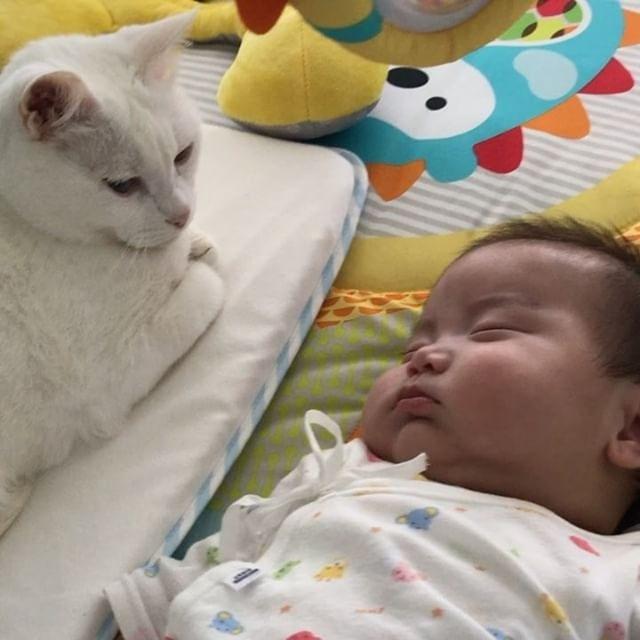 猫咪对小孩十分好奇。