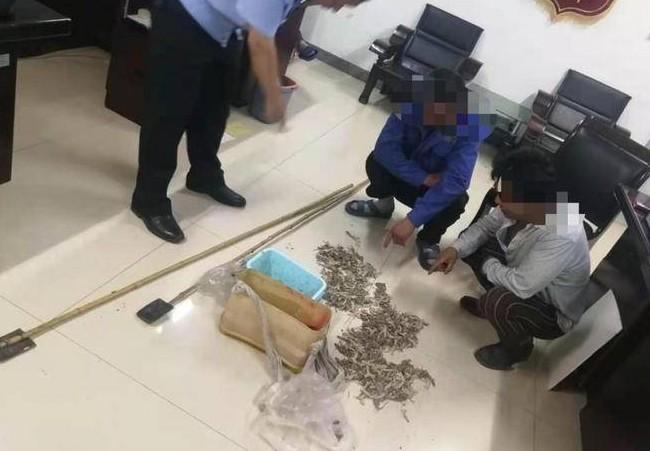 捕捉50只以上壁虎属于重大刑事案件# ,#两男子捉490只壁虎被抓获#