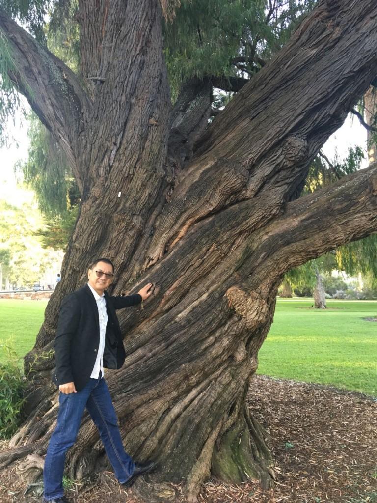 奥大利亚柏斯 King Park 公园的逆时针旋转大树。